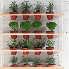 Vertical Gardens Over back hallway window? Create a space-saving vertical herb garden with these brilliant DIY ideas. - Create a space-saving vertical herb garden with these brilliant DIY ideas. Vertical Herb Gardens, Vertical Garden Design, Window Herb Gardens, Hanging Gardens, Garden Shelves, Plant Shelves, Hanging Shelves, Indoor Plant Wall, Indoor Plants