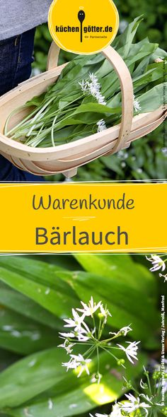 """Warenkunde Bärlauch: Gesund wie der Knoblauch, doch raffinierter im Geschmack verwandelt der """"Waldknoblauch"""" selbst einfachste Gerichte in ein feines Gourmeterlebnis."""