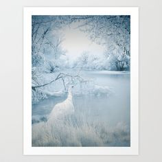 White peacock in a beautiful, silver blue, snow covered winter landscape