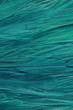 Feather Blue Bird Pattern #iPhone #4s # wallpaper