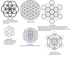 Stages of Sacred Geometry , seed of life , flower of life , fruit of life , egg of life , tree of life , metatrons cube www.orgonitecity.org