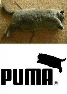 This Cat obviously thinks he a shoe logo.