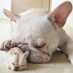 ----------------------------------------------------Custom Hashtags #franchebulldogsclub #frenchbulldog #french_bulldogs #frenchie #frenchieoftheday #franskbulldog #frenchbull #fransebulldog #frenchbulldog #frenchiepuppy #dog #petstagram #puppy #puppylove #bully #bulldog #englishbulldog #bulldogs #bulldogfrances #love #cute #like4like #followme #likeforlike #follow4follow #tagsforlikes #f4f ----------------------------------------------------