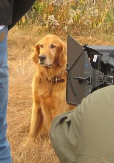 Joe the Dog plays Reggie in the Jesse Stone movies. Love That Dog!