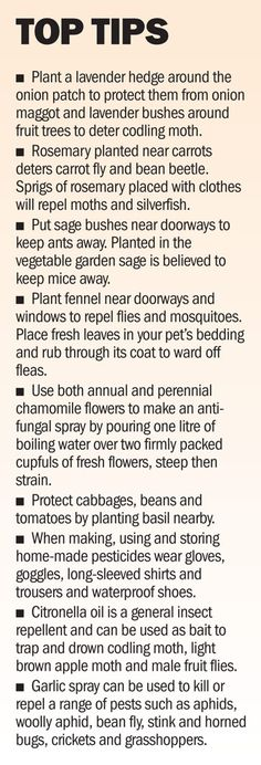 Top planting tips | herbs | veggies | fruit