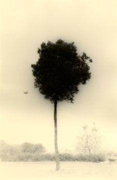 Masao Yamamoto KAWA=FLOW #1612, 2012 gelatin silver print