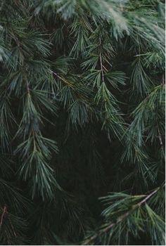 elv's: Christmas time
