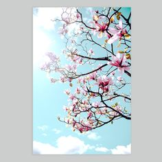 Wall Art - Magnolia on a Sunny Day Beautiful Day, Beautiful Flowers, Contemporary Wall Art, Magnolias, Your Space, Branches, Sunny Days, Vancouver, Sunnies
