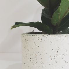 concrete planter by byJoessa on Etsy