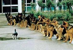 警察犬の最後の試験の試験官を勤めるこの道10年のベテラン猫。警察犬としての落ち着きを見る試験で、猫を追わなければ合格。