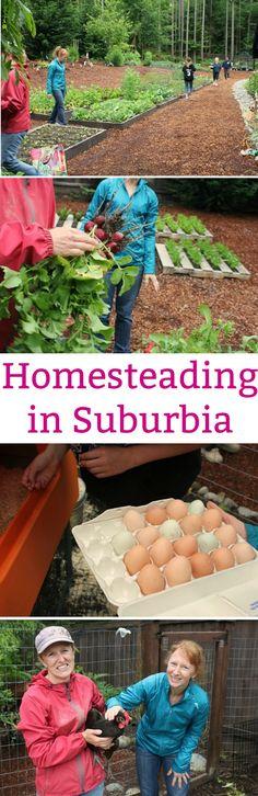 homesteading ideas, vegetable garden ideas, raised garden bed ideas, garden map, gardening