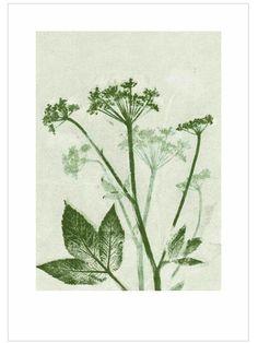 Groundelder Green Print (50x70cm) by Pernille Folcarelli