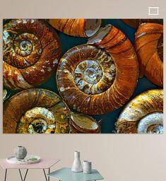 Makroaufnahme von Gehäusen von Posthornschnecken Amazing Photos, Cool Photos, Illustration, Colors, Animals, Macro Shots, Printing On Wood, Artist Canvas, Digital Art