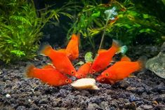How to Make Gel Food for Your Aquarium Fish in 7 Minutes - Aquarium Co-Op Aquarium Fish Food, Aquarium Air Pump, Cool Fish Tanks, Baby First Foods, Baby Fish, Fish Farming, Types Of Fish, Angel Fish, Keeping Healthy