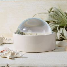 Treasure Box Ceramic Display Dish w/ Magnifying Dome design by Twos Company