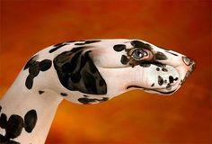 La alucinancia es poderosa en mí: Manos pintadas como animales