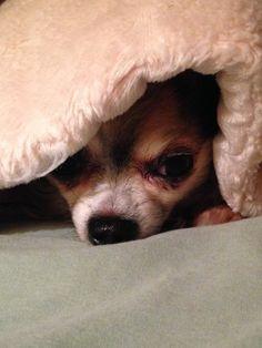 Lola- peeking out