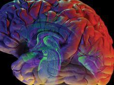 La liste de ses conséquences continue de s'allonger. Après la confirmation du lien avec le syndrome Guillain-Barré, la microcéphalie et la myélite aiguë, des médecins français constatent que le virus peut aussi provoquer une inflammation du cerveau et des méninges chez l'adulte, voire entraîner un coma.