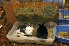 Best Litter Box Setup EVER!! All i can say is white rabbit...yellow feet...after putting this litter box together...white rabbit...white rabbit feet!