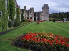 Ashford Castle. Gorgeous Castle where the boys did falconry.