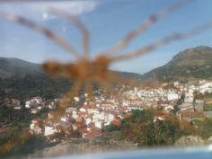 Tela de araña... (1)