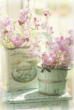 wildflowers in the sunlight | Flickr : partage de photos !
