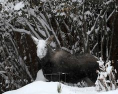 Heavy snowfall hits Anchorage on 12/12/12