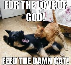 For The Love Of God Feed The Damn Cat, Click the link to view today's funniest pictures!