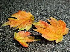 ~ Sugar Teachers ~ Cake Decorating and Sugar Art Tutorials: Autumn Maple leaf tutorial