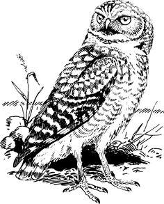 Animal, Bird, Forest, Nature, Owl, Wood