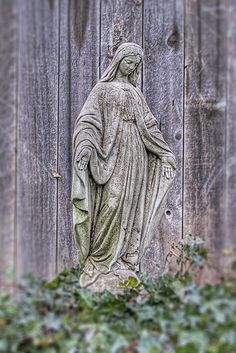 Virgin Mary Statue In My Garden On Bed Of Ivy