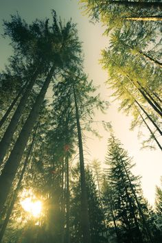 I took a walk in the woods and came out taller than the trees... ~Thoreau
