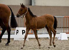 Horses, by www.rikjanssensfotografie.com