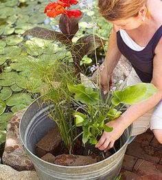 Add a focal point to your patio or deck with a gorgeous water garden.