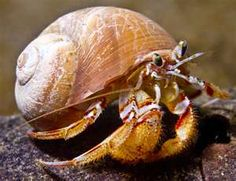 Cool hermit crab