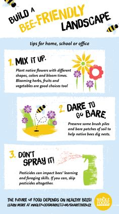 Build a bee-friendly landscape to help the pollinators!