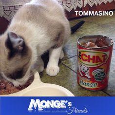 Tommasino #Mongesfriends