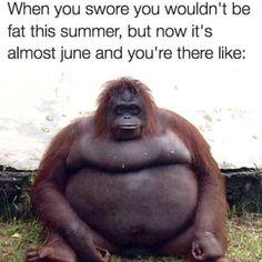 fat-summer-meme Gym Memes, Dankest Memes, Funny Memes, Funny Comedy, Crush Memes, Disney Memes, Spongebob, Have A Blessed Sunday, Meme Page