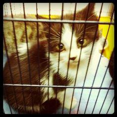 """El gatito de ojos grandes"" www.lauralofer.com"