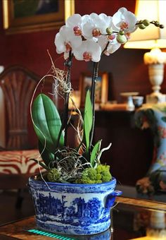 A beautiful way to pot your orchids.