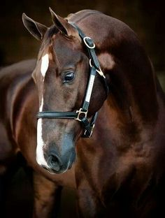 The color of this horse reminds me of dark chocolate. I would name it Cocoa.