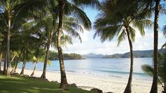 Amazing beach in the Great Barrier Reef, photo taken outside the Hamilton Island Reef View Hotel. See you in a few weeks! Vacation Trips, Vacation Spots, Vacation Travel, Family Vacations, Great Barrier Reef Tours, Hamilton Island, Coast Australia, Australia 2018, Australia Travel