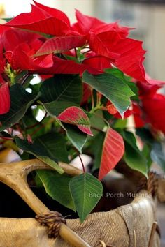Christmas in the TV Room - Back Porch Musings