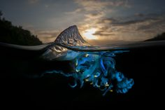 A Parallel Universe: These Half-Underwater Pics Show What Hides Beneath The Waves   The Mind Unleashed
