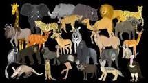 African Animals, Watch V, Animals For Kids, Youtube, Kids Animals, Youtubers, Youtube Movies