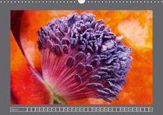 Blumen für dich - CALVENDO