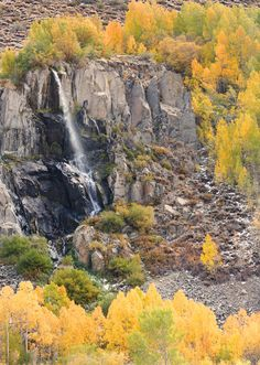 Aspen Falls - Eastern Sierra Nevada - Bishop, California
