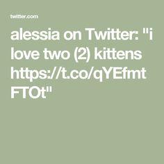 "alessia on Twitter: ""i love two (2) kittens https://t.co/qYEfmtFTOt"""