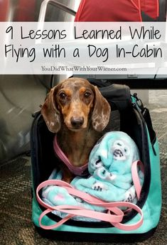 The first time I flew with my Dachshund in the cabin of an airplane I learned a lot of lessons. These might help you plan to fly with your small dog. Flying With Pets, Flying Dog, Puppies Tips, Dogs And Puppies, Doggies, Dogs On Planes, Dog Friendly Hotels, Emotional Support Animal, Dog Travel