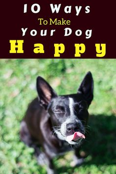 We all know that treats, playtime, dog park, toys etc can bring happiness to his life. But still, at some point or the other, we stuck up thinking the new ways to make our dogs happy. 10 Ways To Make Your Dog Happy